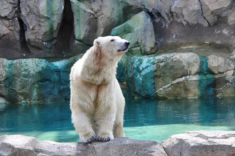 Bear - лучшее красивое приложение создания красивых заметок и записей