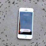 Почему муравьи ходят кругами вокруг iPhone