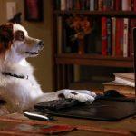 Приложения о собаках на iPhone: дрессировка, питание, здоровье и досуг