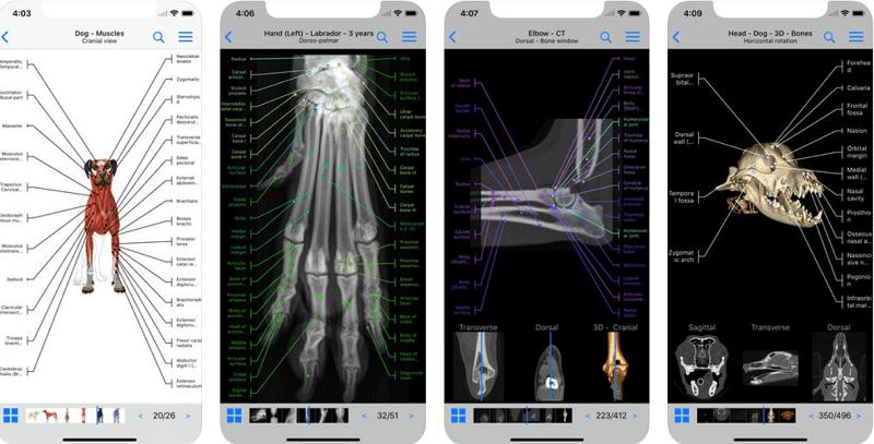 приложения для собак, vet-Anatomy