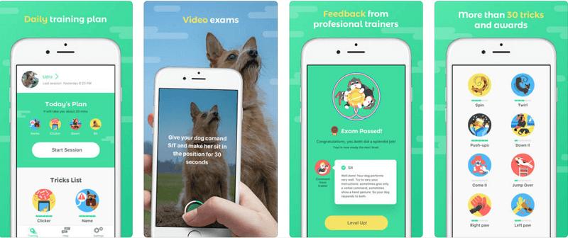 приложения о собаках, Dogo - Your Dog's Favorite App