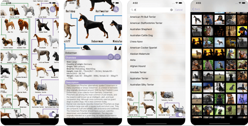приложения о собаках, Dog Breeds - for dog lovers
