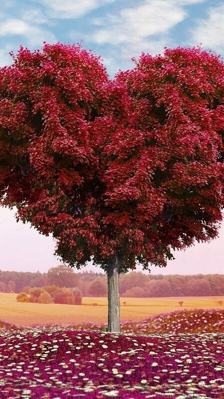 обои осень, обои дерево
