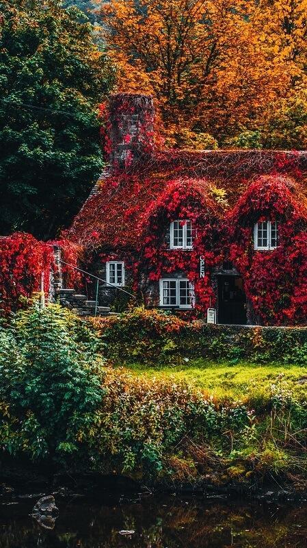 обои осень, обои дом