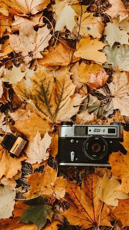 обои осень, обои листья, обои фотоаппарат