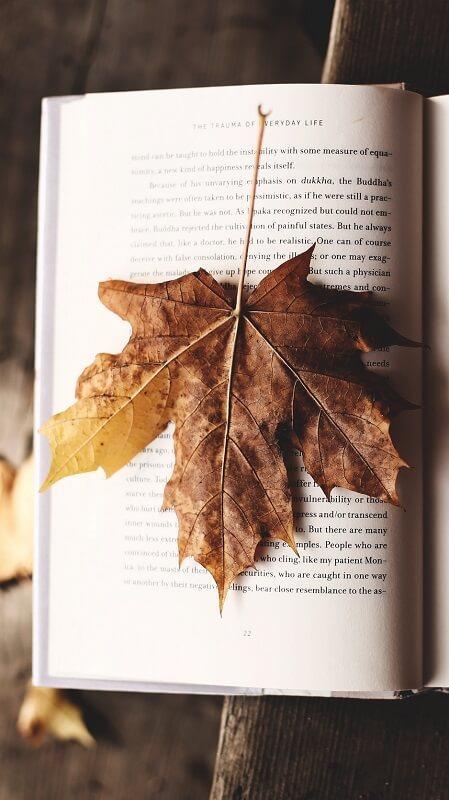 обои осень, обои лист, обои книга