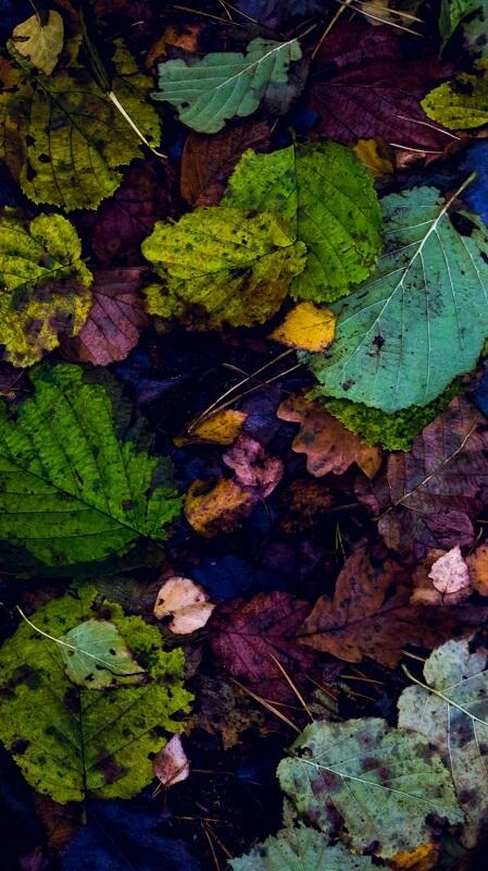 обои осень, осенний пейзаж